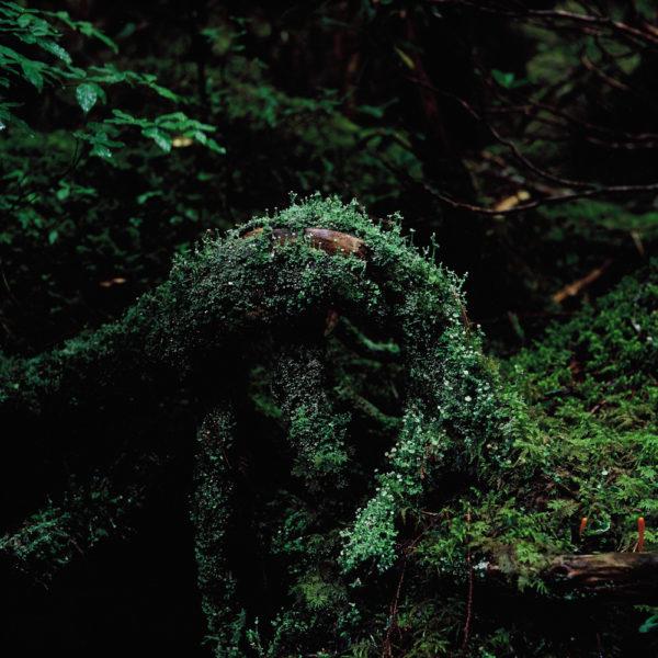 mimi・撮りたい風景を求めて〜北八ヶ岳・白駒池