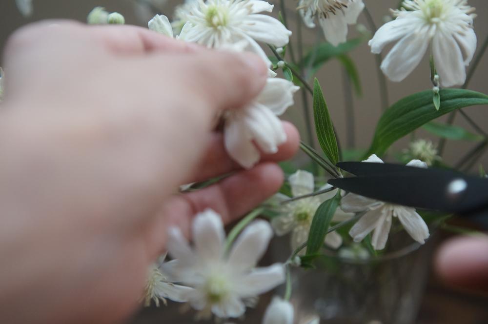 mimi・花の変化を楽しむ