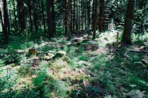 Gaku・PhotoTrip : 森と湖の国