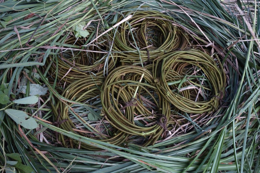 柳川千秋・植物から糸をつくる【染織と日々のすきま】