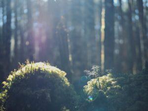 川野恭子・私が「絶景」を撮らない理由。【日々と写真】