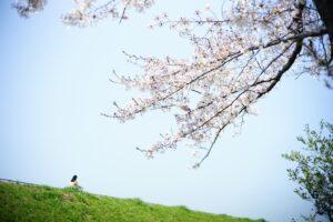saorin・室長の外ごはん白書 vol. 9 思い出の七輪花見