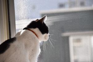 小野﨑由美子・下僕の条件【猫の話をしよう】